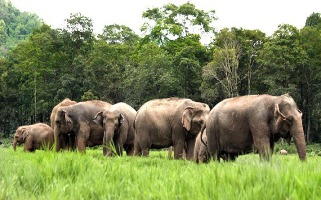 Elephant Nature Park Herd