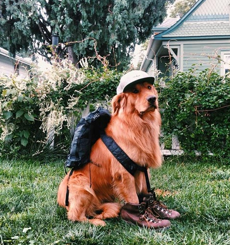 Traveling With A Dog - Tips