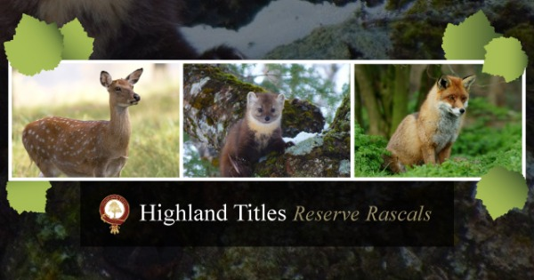 Highland Titles Promo Code